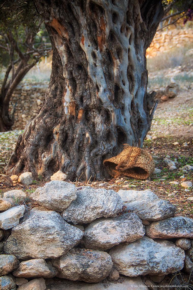 Olive-Tree-basket